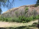 Bell's Vireo habitat, Arizona, Santa Cruz County, near Ruby Road