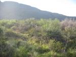 Elephant Mountain Wildlife Management Area, Texas