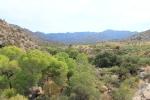 Vireo habitat, Graham County, Arizona